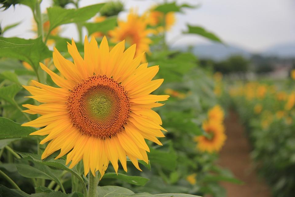 快讯:养殖业板块走强牧原股份涨逾6%