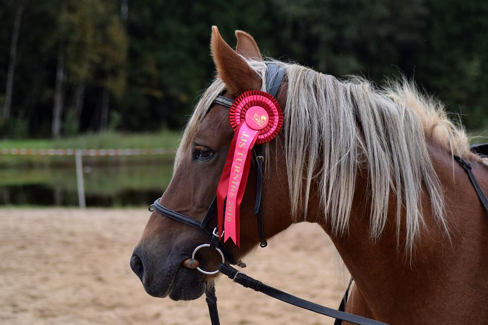 Award ribbon images pixabay download free pictures horse equestrian brown ribbon yadclub Images