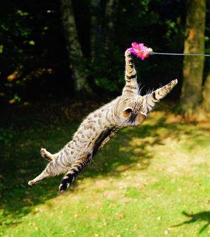 猫, フライング猫, 再生, ジャンプ, 狩猟ドライブ, 楽しい, スポーツ