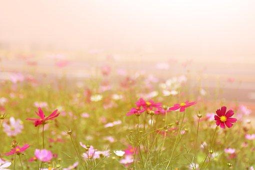 チェジュ島, 済州, オルレギ, 自然, 旅行, 低下させる, 風景, 韓国