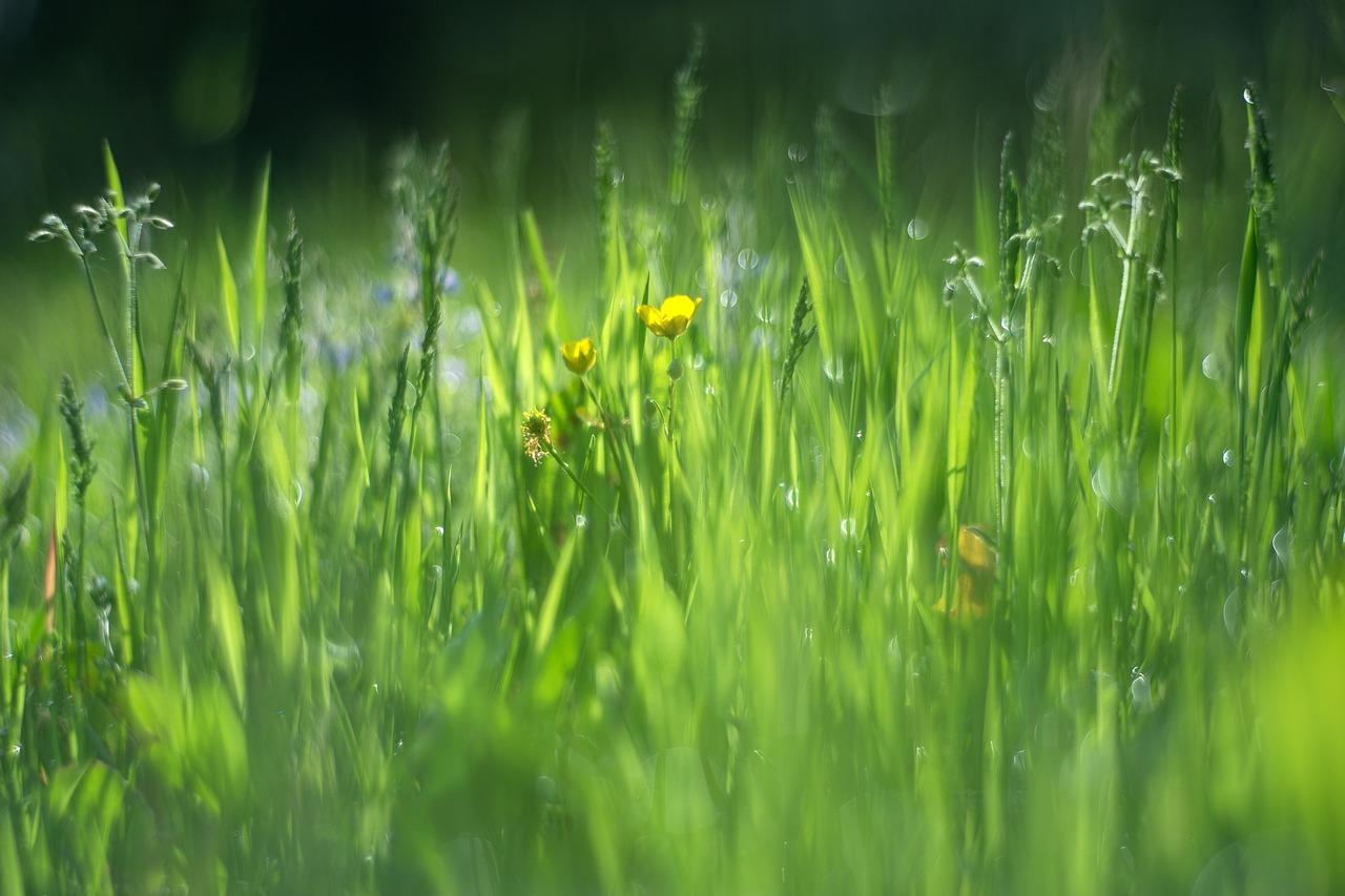 Картинка с травой весной, кофе капучино