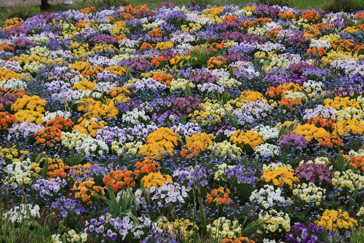 Каталог цветущих клумб их фото