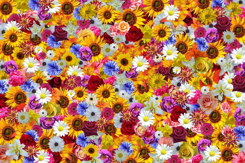 Flowers Sunflower Colorful Free Image On Pixabay