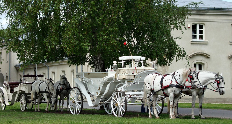 Horse and chaise horse cart izvozchik coachman on for Chaise carriage