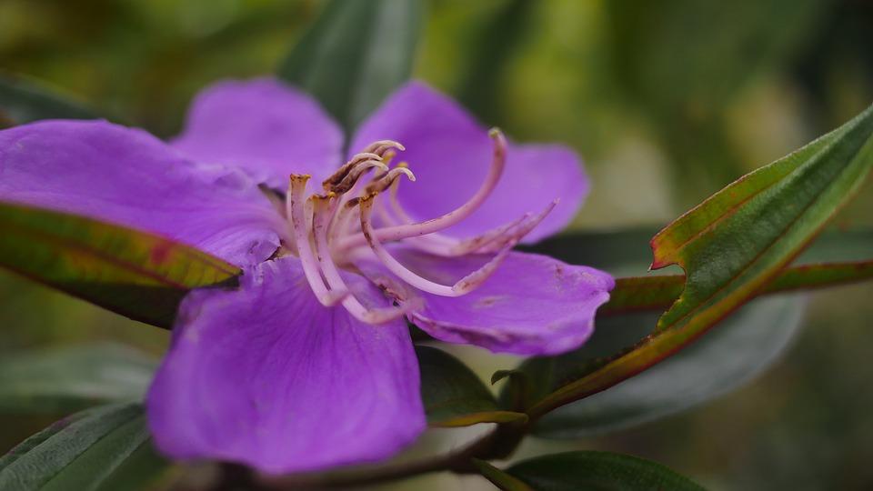 Photo gratuite fleur violette jardini re nature image gratuite sur pixabay 1687074 - Image fleur violette gratuite ...