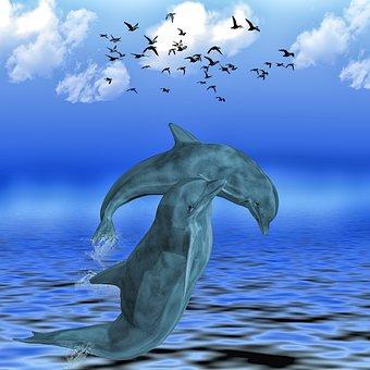 dolphin sea meeresbewohner dolphins animal - Dolphin Pics
