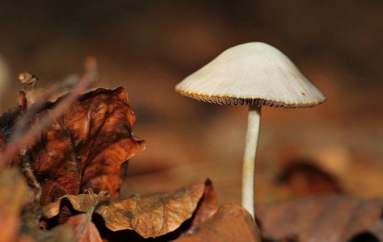Mushroom, Leaves, Forest, Fall, Nature