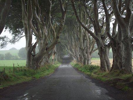 Game Of Thrones, Ireland, Trees, Hedges