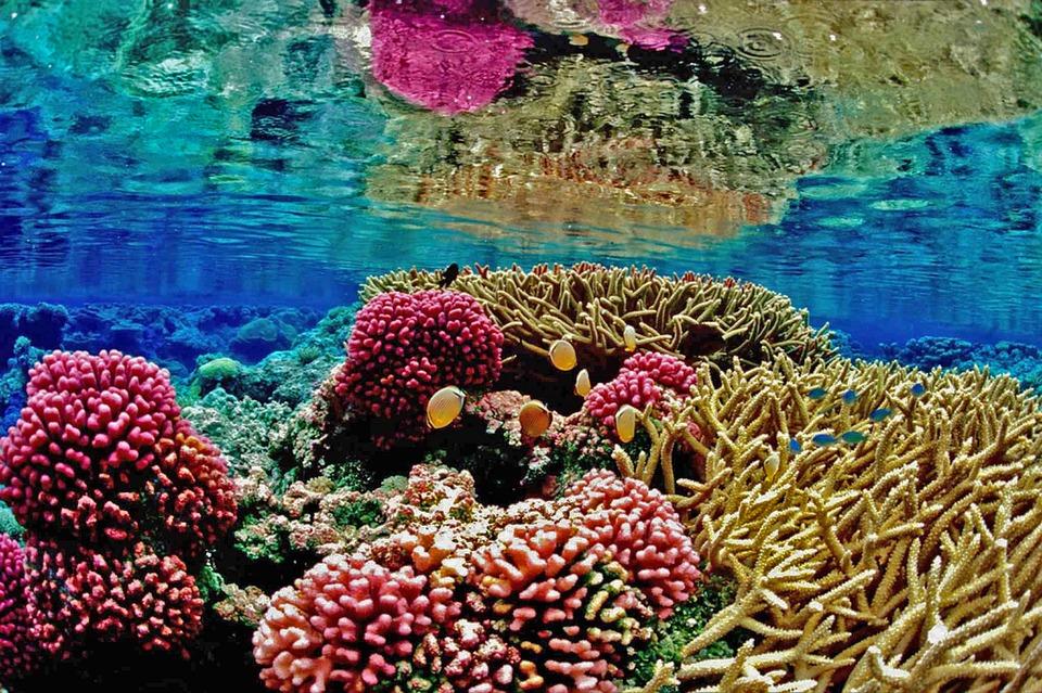 Recife, Coral Reef, Mar, Marine, Océan, Anémone, Plage