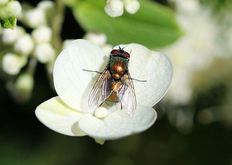 Protect Garden Pests All-seasons Backyard Guide