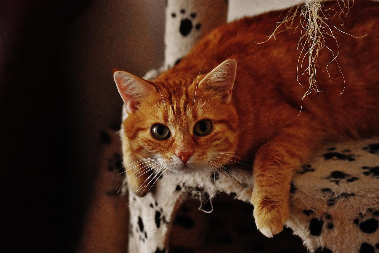 Картинки приколы рыжих кошек