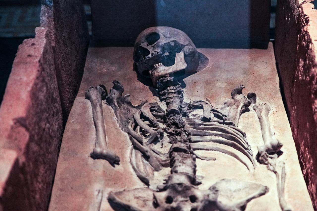 Skeleton Skull Old - Free photo on Pixabay