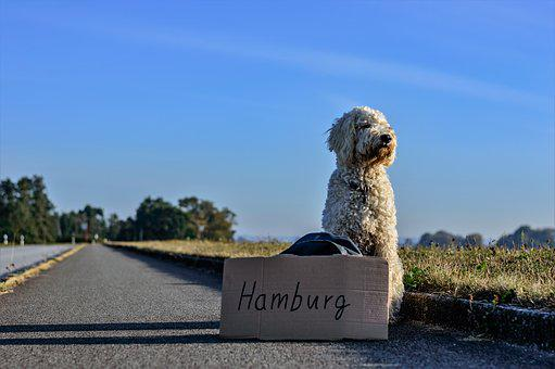 Hitcher, Hitch-Hike, Dog, Road, Travel