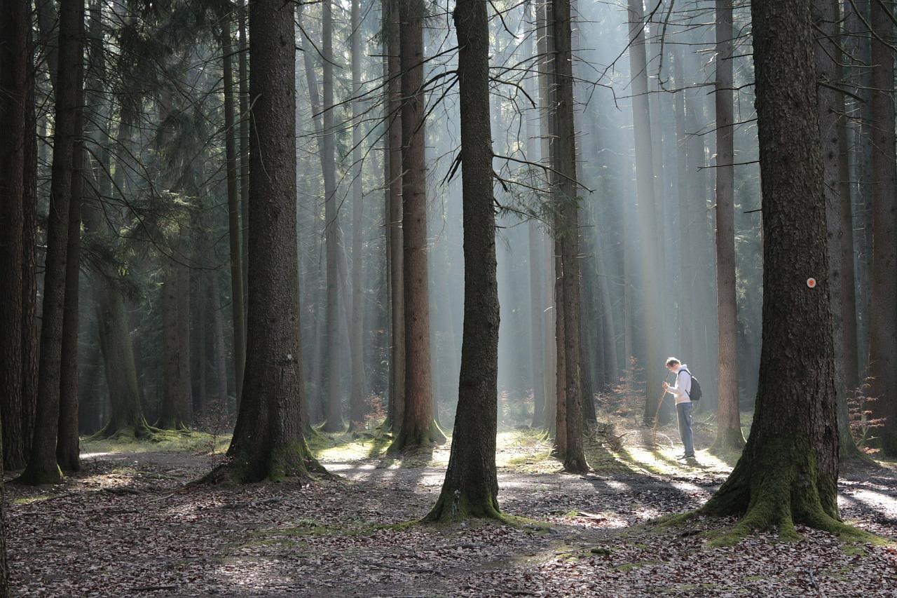 бурундук, картинка кровать в лесу является