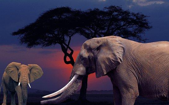 Éléphant, Savane, Arrangement
