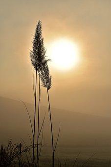 Grass, Rétro Éclairage, Brouillard