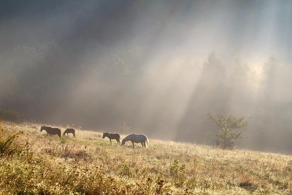 Morning Light >> Morning Light Horse Free Photo On Pixabay