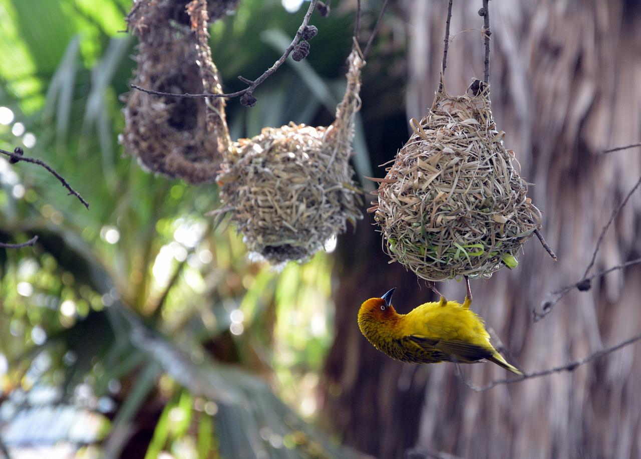 ручной картинка птица вьет гнездо модный французский