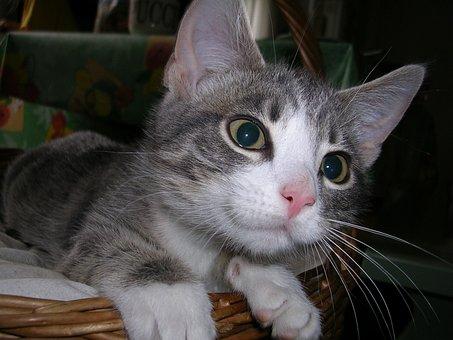 cat-1695918__340.jpg