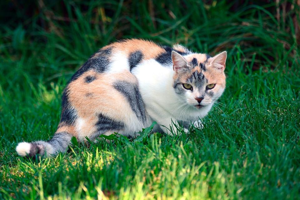 Gato Colorido Pet Foto Gratuita No Pixabay