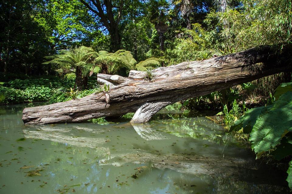 Moeras hout vijver gratis foto op pixabay for Vijver afwerking hout