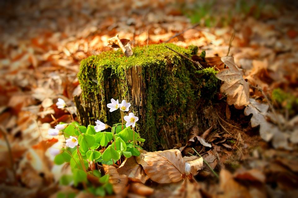 Foresta, Fiore Foresta, Avar, Autunno, Stagione, Bloom