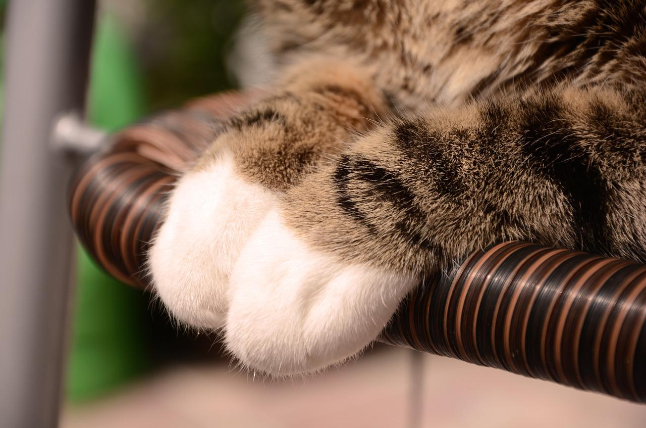 Domestic cat behavior problems
