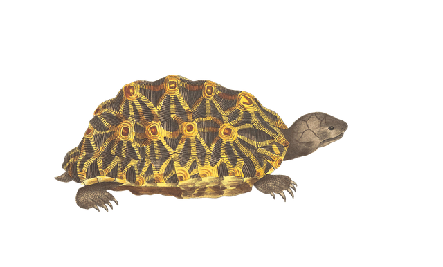 turtle animal reptile  u00b7 free image on pixabay horse clipart images sayings horses clip art images