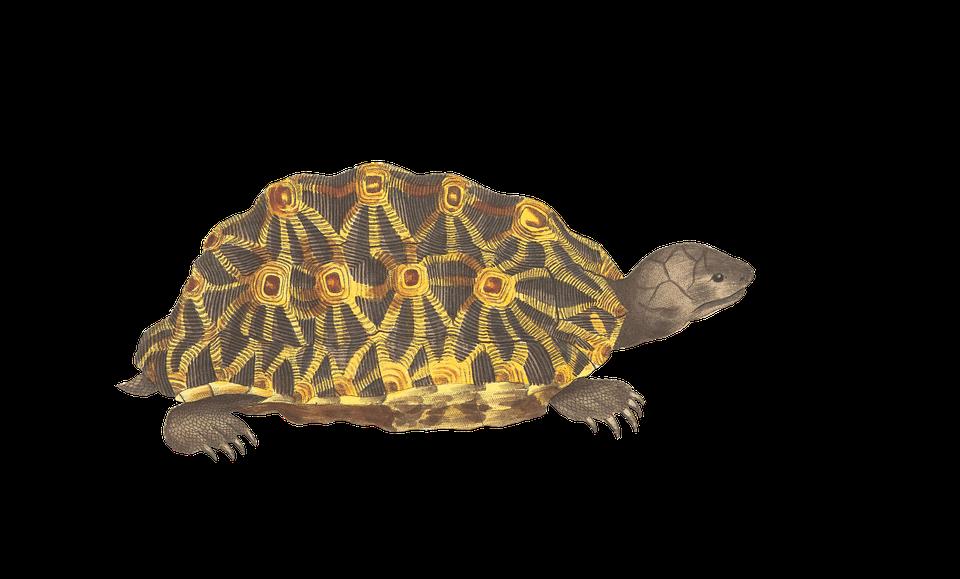turtle animal reptile  u00b7 free image on pixabay horses clipart black and white horse clipart romance