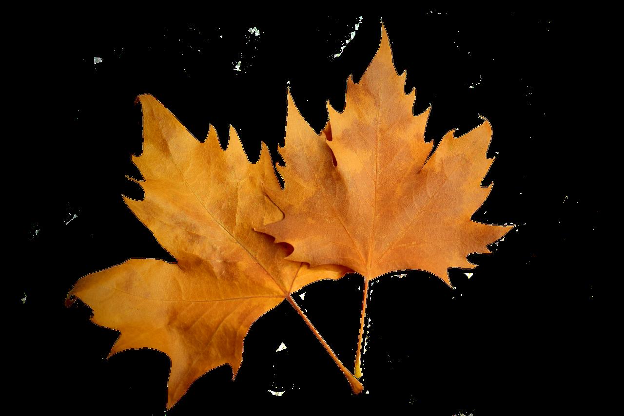 Привет, желтые листья картинки на белом фоне