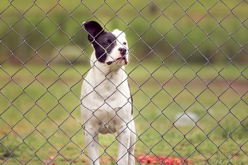 Grube Hund Klein Kostenloses Foto Auf Pixabay