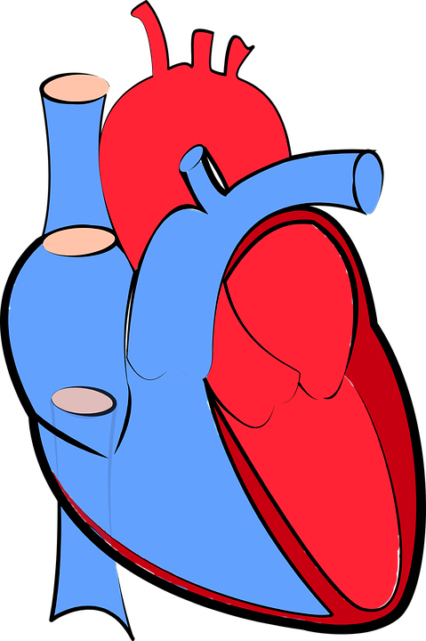 Free vector graphic human heart blood flow free image on human heart blood flow oxygenated and deoxygenated ccuart Images