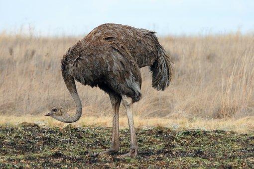 Wild Game Ostrich Wildlife Reserve Park Ne
