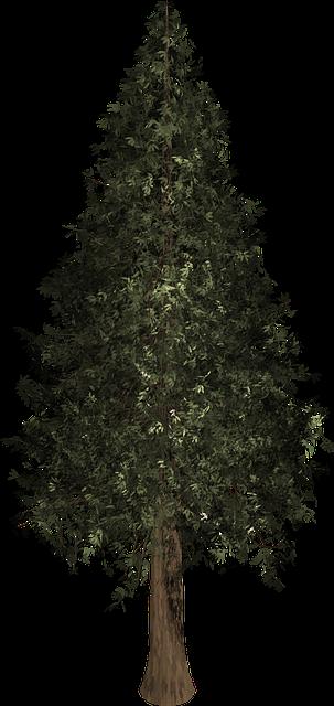 Pine Tree For Christmas