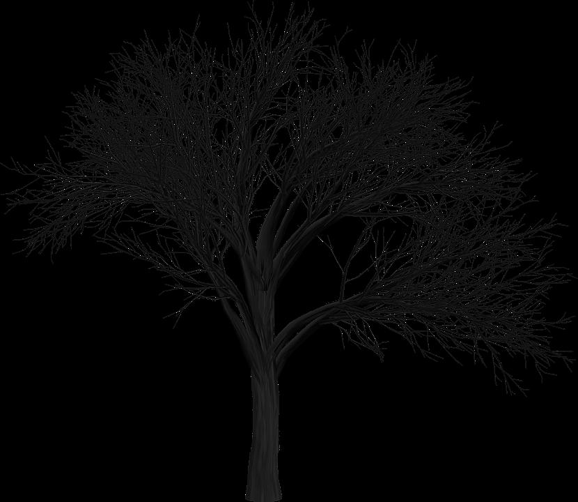 tree branch empty free image on pixabay