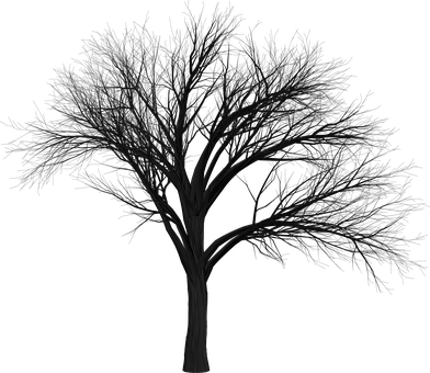 Tree, Branch, Empty, Isolated, Black