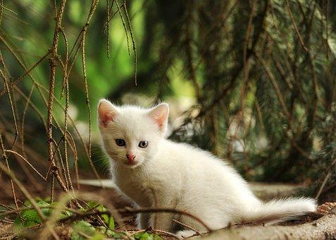 Katze, Kätzchen, Jungtier, Wildkatze