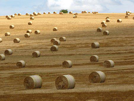 Straw Bale, Meadow, Summer, Agriculture