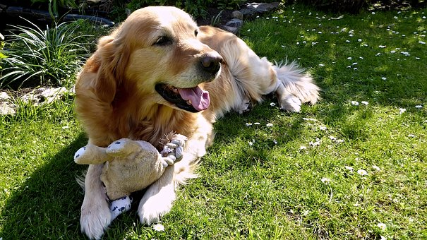 dog and garden images pixabay download free pictures
