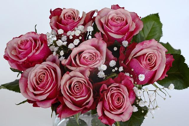 Free Photo: Roses, Flowers, Rose Flower