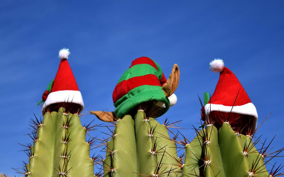 Cactus Christmas Holiday 183 Free Photo On Pixabay