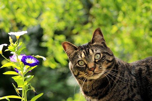 Katze, Kätzchen, Blume, Frühling