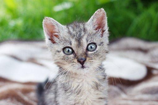 Dart Kitten A Member Of The Family Grass A