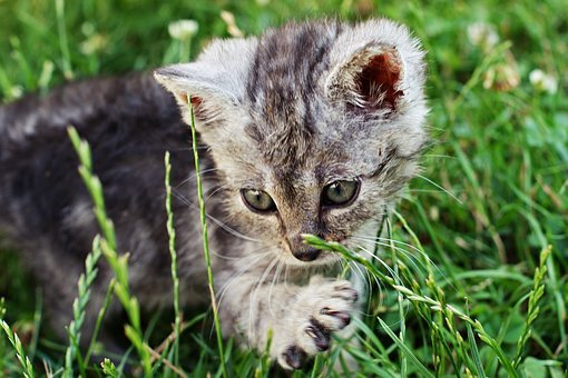 Dart, Kitten, A Member Of The Family