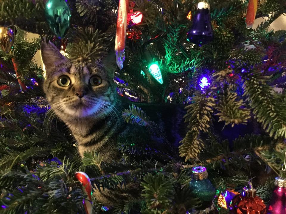 Kitty, Albero Di Natale, Animale Domestico, Animale