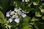 flower, violet, green