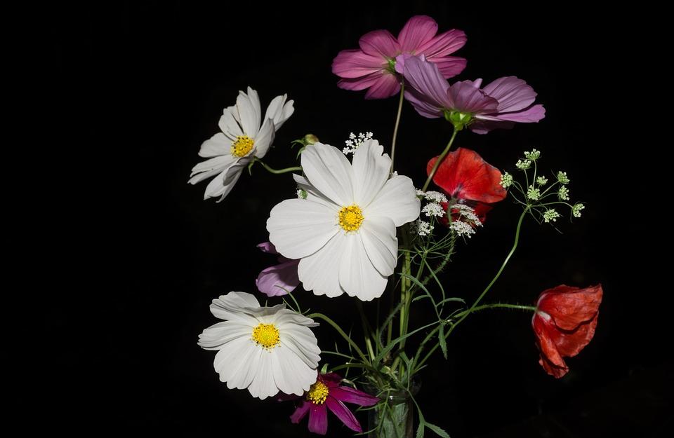 sauvage fleurs bouquet fond noir fleurs sauvages
