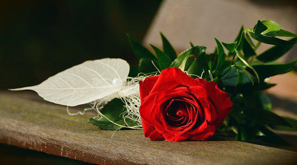 Rose, Red Rose, Birthday, Greeting,Know more about the days leading up to Valentine's day like Rose Day, Chocolate day and Anti-Valentine's day like break up day, slap day and more.