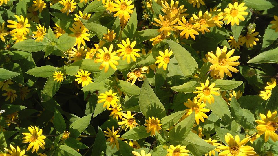 Small yellow flowers nature garden free photo on pixabay small yellow flowers nature garden flower spring mightylinksfo