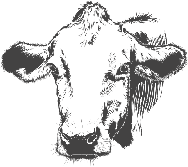 Cow Cattle Animal · Free vector graphic on Pixabay